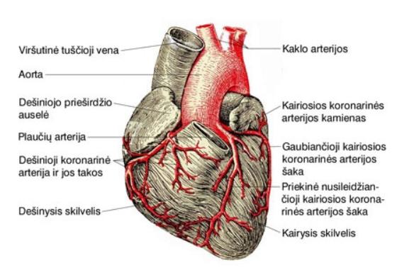 hipertenzija ir skausmingi širdies skausmai)
